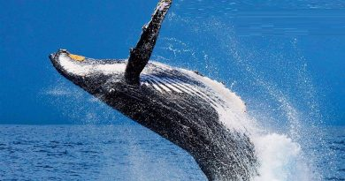 The Best Day Out in Sydney – Whale Watching Cruises